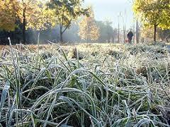 В Тольятти ожидаются заморозки